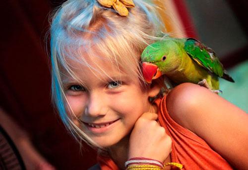Загадки про попугая для детей 5-7 лет