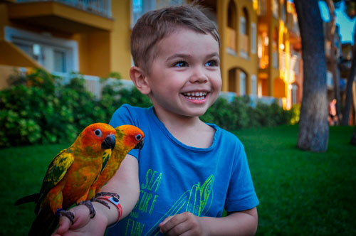 Загадки про попугая для детей 7-9 лет