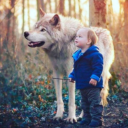 Загадка про волка для детей 4-5 лет