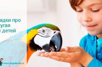 Загадки про попугая для детей