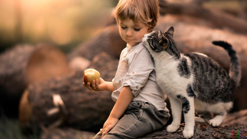 Загадки про кошку для детей 5-7 лет