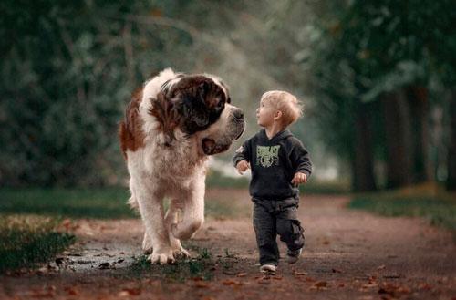 Загадки про собаку с ответами для детей