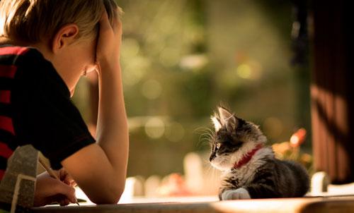 Загадки про кошку для детей 4-5 лет с ответами