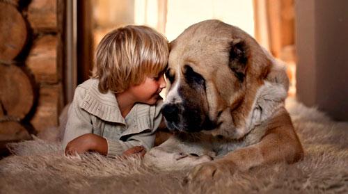 Загадки про собаку с ответами для детей 4-5 лет