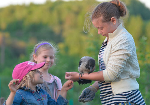 Загадки про птиц для детей: ворона