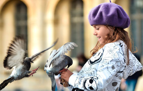 Загадки про птиц для детей: голубь