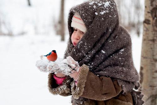 Загадки про птиц для детей: снегирь