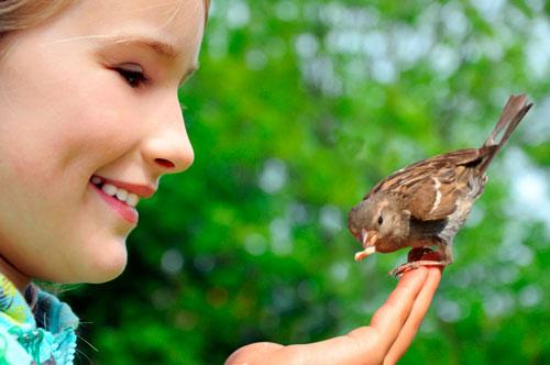 Загадки про птиц для детей: воробей