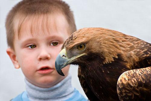 Загадки про птиц для детей: орёл