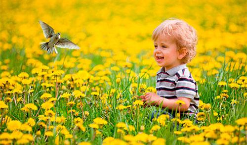 Загадки про птиц для детей: жаворонок