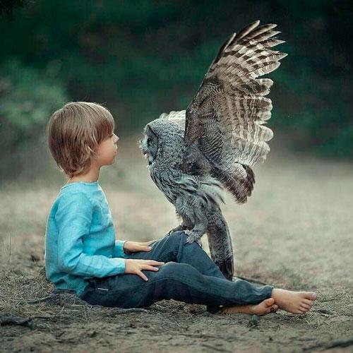 Загадки про птиц для детей: сова