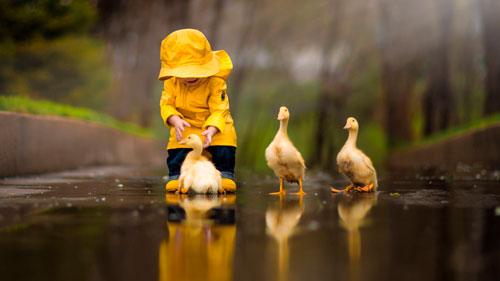 Загадки про птиц для детей: утка