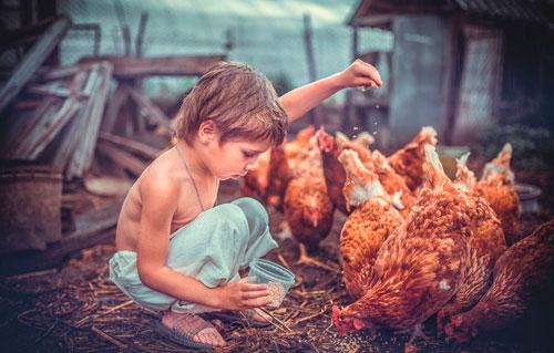 Загадки про птиц для детей: курица
