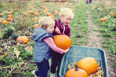 сбор урожая в качестве занятия детей осенью