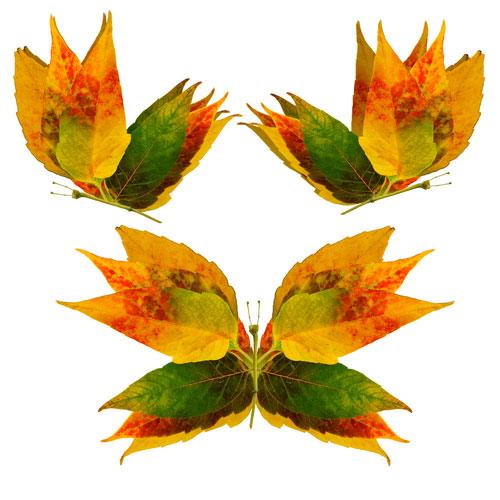 Картины из осенних листьев для детского сада: бабочки